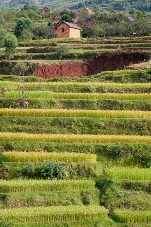Terrasses de champ de riz avec village traditionnel à Madagascar Banque d'images