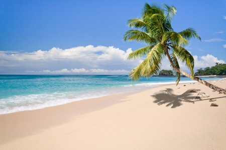Desert island with palm tree on the beach Фото со стока