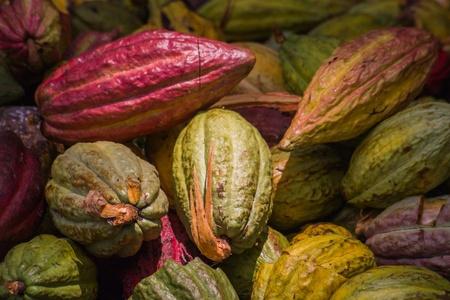 Cabosses de cacao d'Ambanja, Madagascar