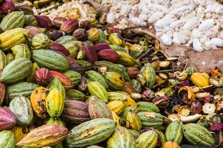 Cocoa pods from Ambanja, Madagascar photo