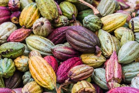 cacao: Vainas de cacao de Ambanja, Madagascar