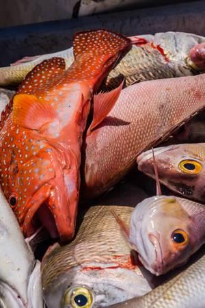 Heap of freshly caught dead fish Stock Photo - 12902388