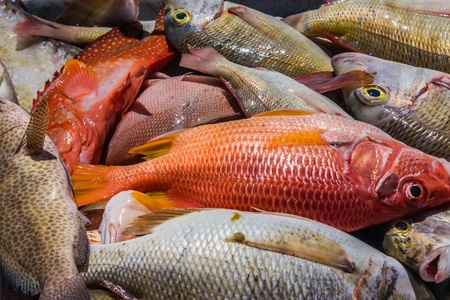 Heap of freshly caught dead fish Stock Photo - 12902407