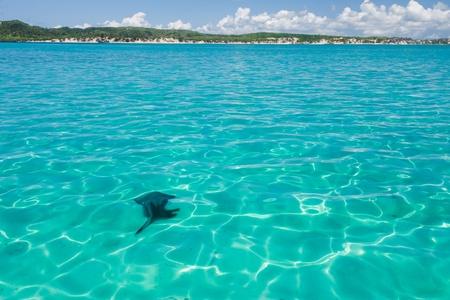 diego: The emerald sea of Antsiranana bay  Diego Suarez , northern Madagascar