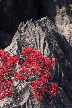 geologic: Tsingy, geologic erosion of Ankarana, Madagascar