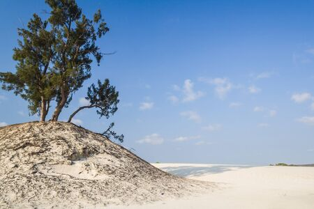 Dune and wild beach in southern Madagascar photo