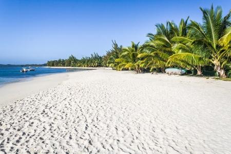 sandy beach: Beautiful sandy beach with coconut palm trees Stock Photo