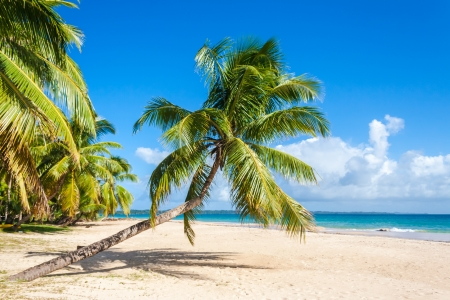Tropical landscape from Sainte Marie Island photo