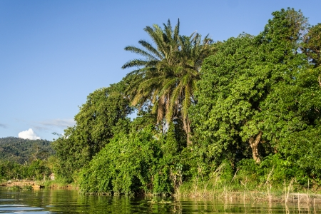 river bank: Lush tropical vegetation on the riverbanks