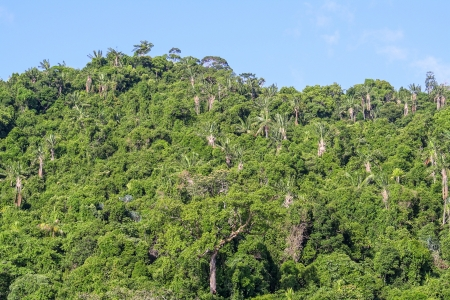 The Masoala forest in eastern Madagascar  photo