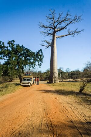 Malagasy people traveling in the bush taxi (taxi brousse) beside the large baobab on july 3, 2006, in western Madagascar