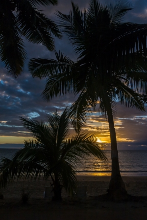 oversea: Sunset on palm trees in Nosy Be island, northern Madagascar
