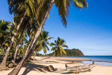 dugout: Beautiful tropical sandy beach, seascape with palm trees