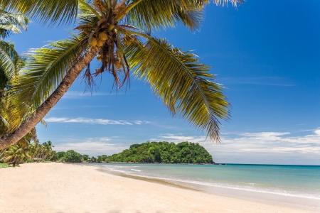 Belle plage de sable tropical, marin avec palmiers