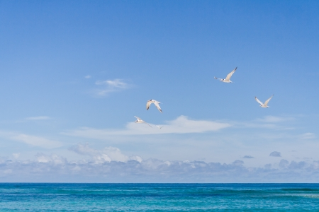 Seabirds flying over the beach of Nosy Be, Madagascar photo