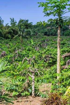 nosy: Ylang-Ylang plantation in Nosy Be, Madagascar Stock Photo
