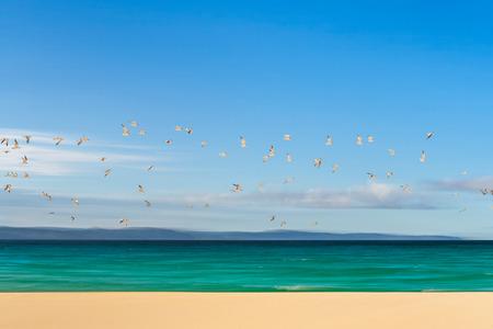 Flight of terns on the sandbank of Nosy Iranja near Nosy Be, Madagascar