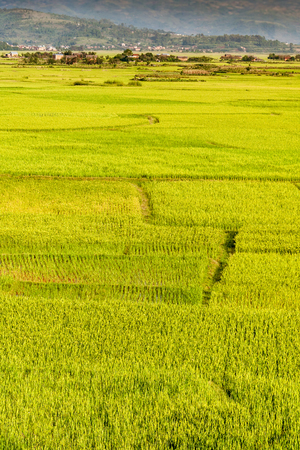Paddy field in front of a rural village in Madagascar highlands Imagens