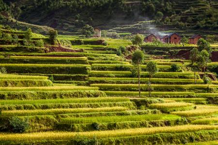 마다 가스 카 르 고원의 시골 마을 앞의 논밭