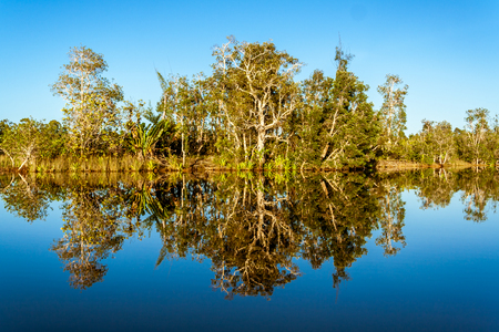 Reflections of tropical vegetation in the Pangalanes canal, east of Madagascar Stock Photo