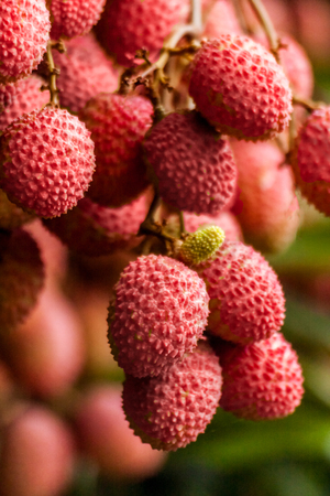Ripe lychee fruits on tree in the plantation