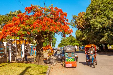 rikscha: Toamasina, Madagaskar, November 23, 2016: Traditionelle Rikschas (Pousse-Pousse) unter einem extravaganten Baum in Toamasina (Tamatave), östlich von Madagaskar