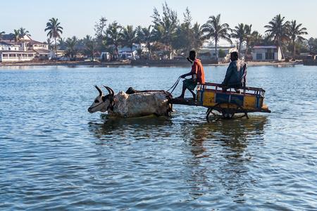 Toliara, Madagascar, October 21, 2016: Zebu carts unloading ships at the port of Toliara, Madagascar 에디토리얼