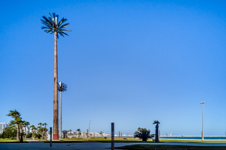 Cell tower disguised as a palm tree in Tangier, Morocco Stock Photo