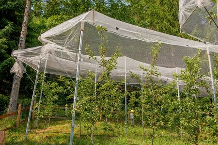 Apple tree protection network against hail