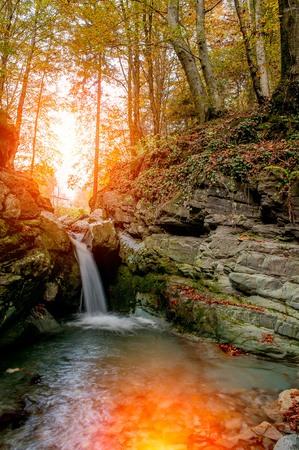 秋の森の川の水の滝
