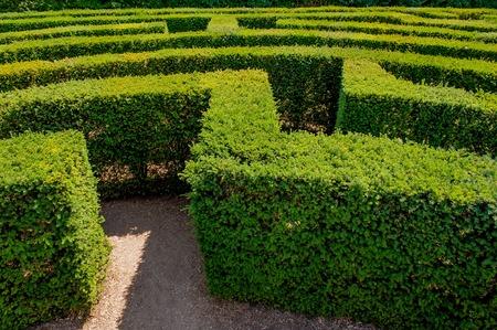 Orientation between the vegetation