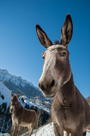 donkeys grazing in freedom