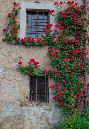 farmhouse with climbing red roses