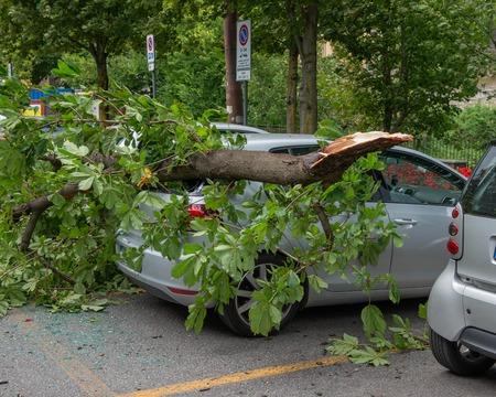 coche arruinado por la caída de la rama de un árbol