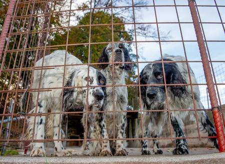 Hunting dog in a cage Foto de archivo - 111412535