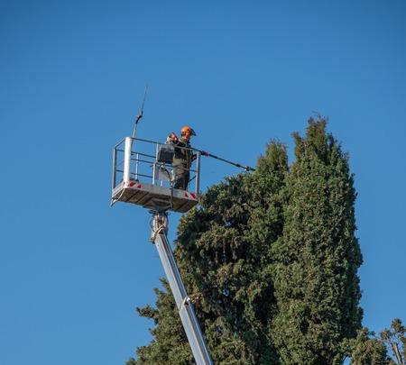 gardener pruning tree on mobile platform