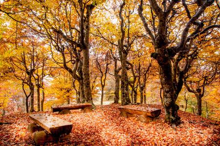 paysage d'automne aux couleurs vives Banque d'images