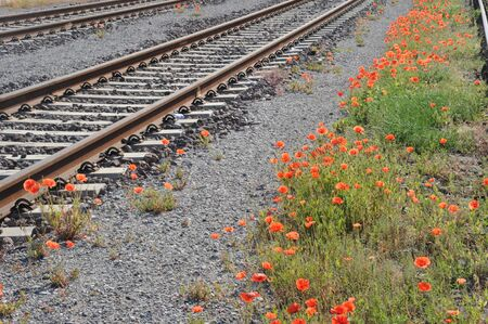 railroad with colorful poppy flowers Фото со стока