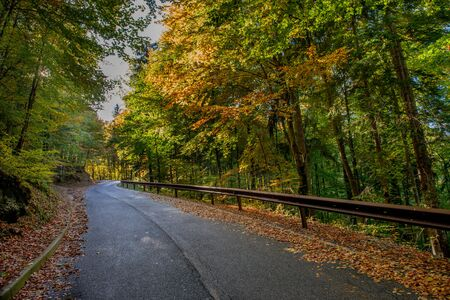 bend in mountain road in the forest in autumn