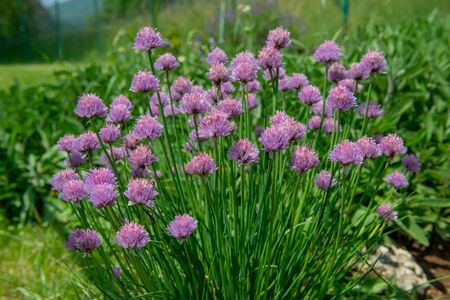 chives to flavor the food