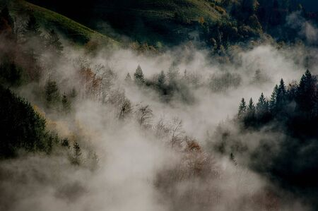 fog in the morning with trees in the mountains