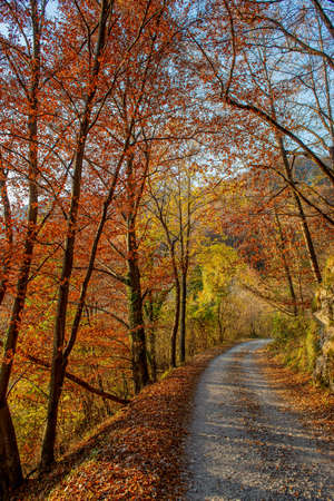 road in the autumn forest with colorful leaves 免版税图像