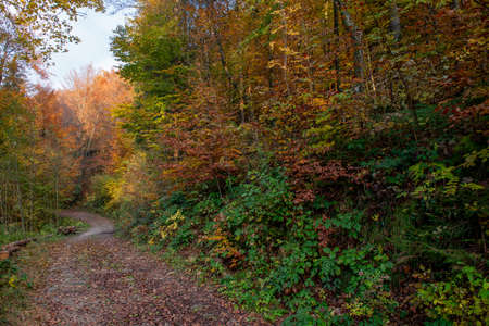 bright colors of the forest in autumn