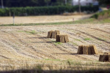 plowed field with hay stacks