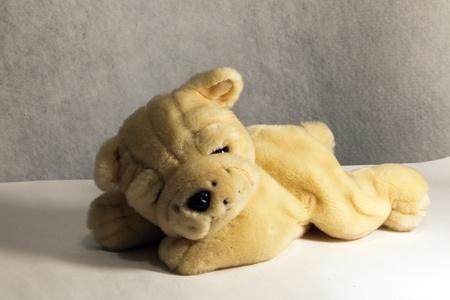dog sleeping teddy