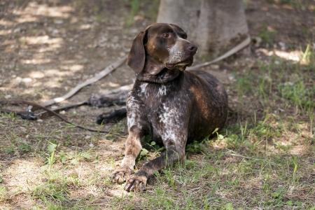 cute hound