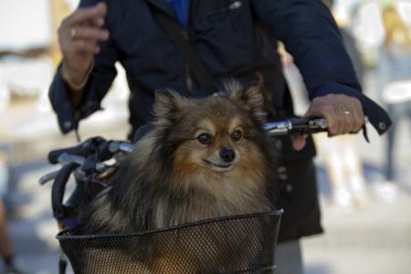 puppy in the desk Stock Photo