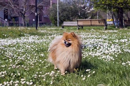 dog in flower meadow