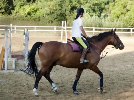 cavallo che salta: gara di equitazione Archivio Fotografico
