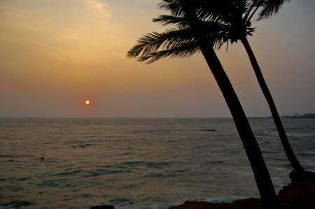 palmtrees: sunset and palmtrees Stock Photo